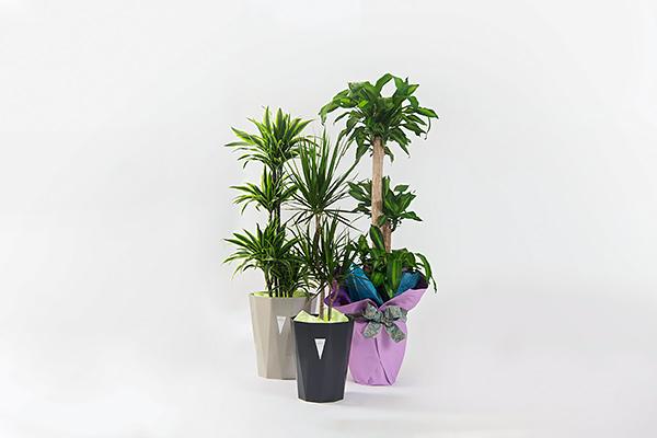 観葉植物・レンタルグリーン