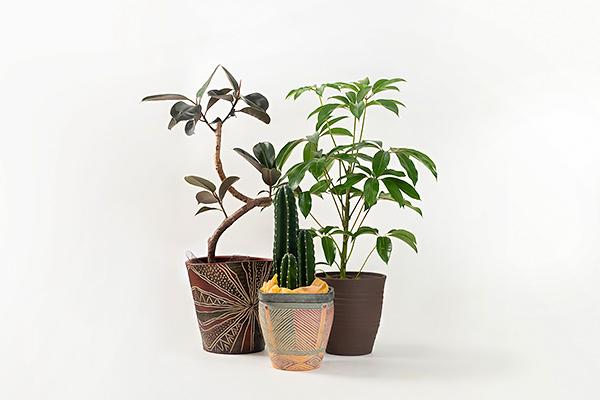 観葉植物・レンタルグリーン2